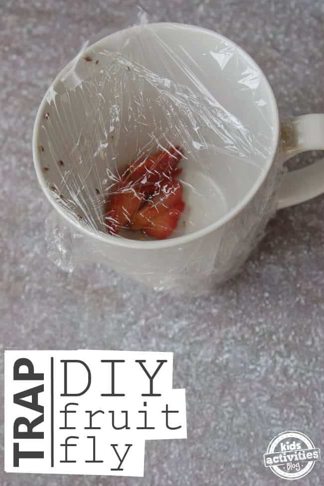 diy-fruit-fly-trap-5