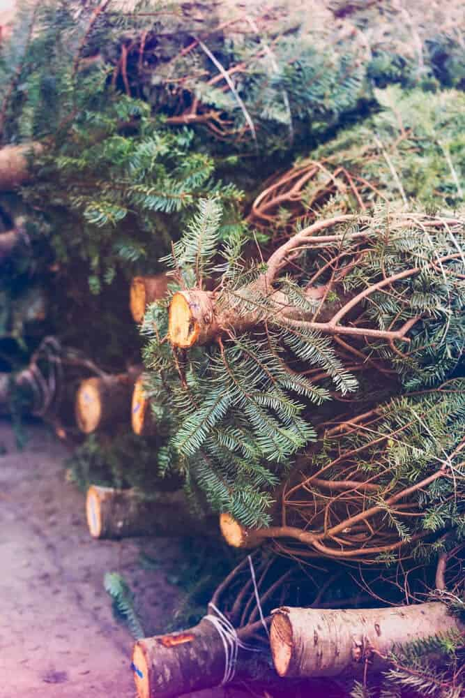 6 Tips on Keeping Your Christmas Tree Fresh
