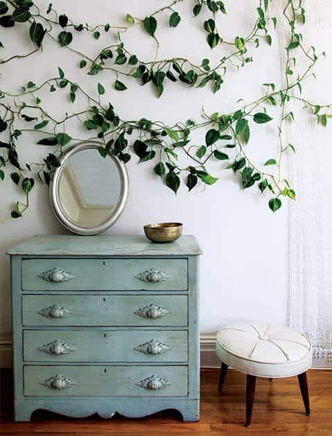 5 Gorgeous Indoor Vines To Grow In Your Home