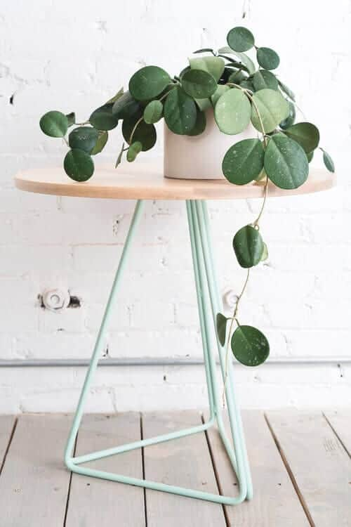 5 Gorgeous Indoor Vines To Grow In Your Home on common vine cactus, common houseplants green, most common flowering houseplants, common houseplant names, common poisonous houseplants, common houseplants philodendron, common vine flowers, common houseplants good in shade, common palm houseplants, common plants, common vine weeds, common succulent houseplants, common houseplants care of,